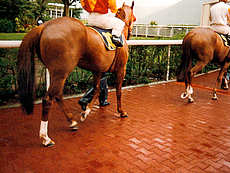 Interlocking Pavers for Equestrian Flooring